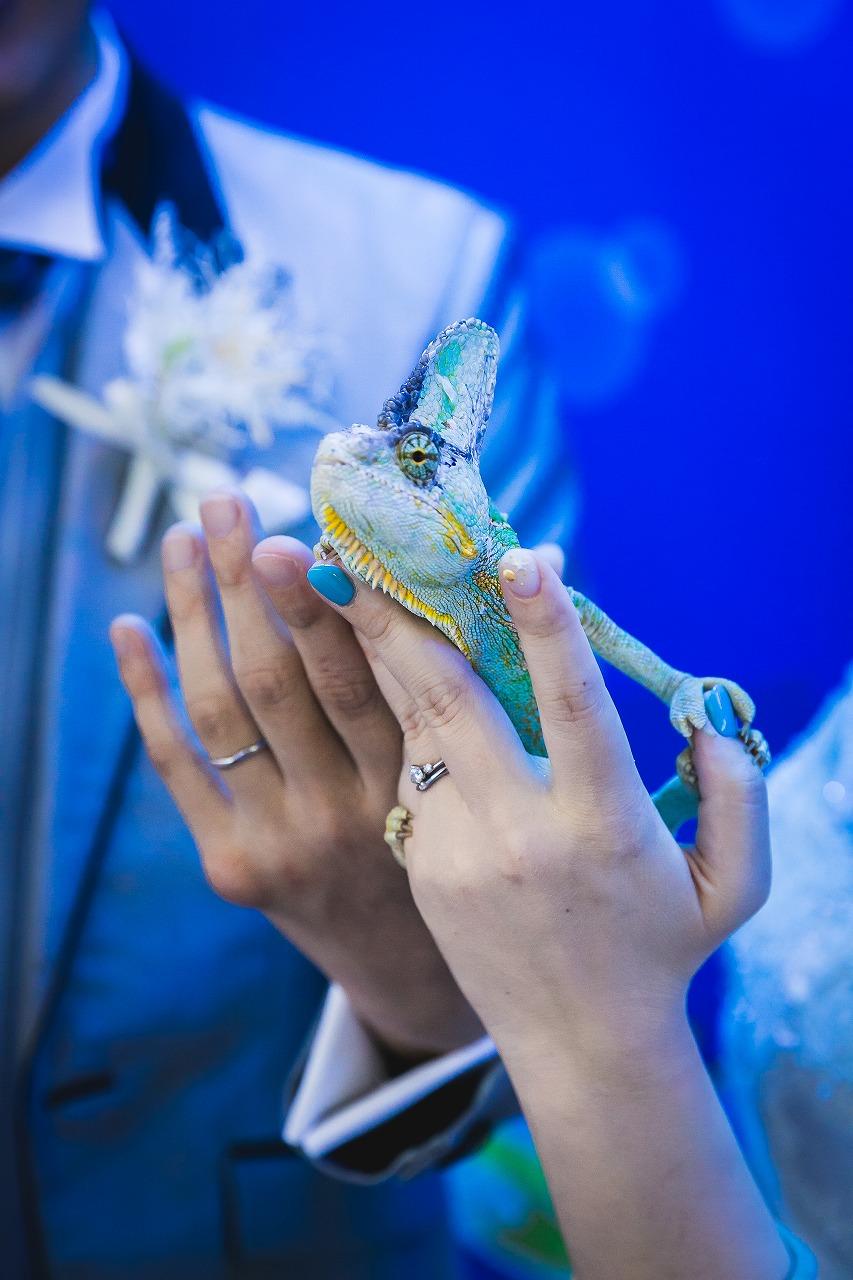 須磨水族園 オリジナルウェディング ウェディングプロデュース プロデュース会社 フリープランナー 大阪 神戸 京都 結婚式